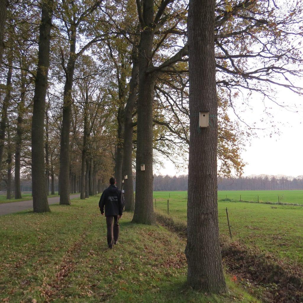 Bomenrij met nestkastjes-LIFE-project