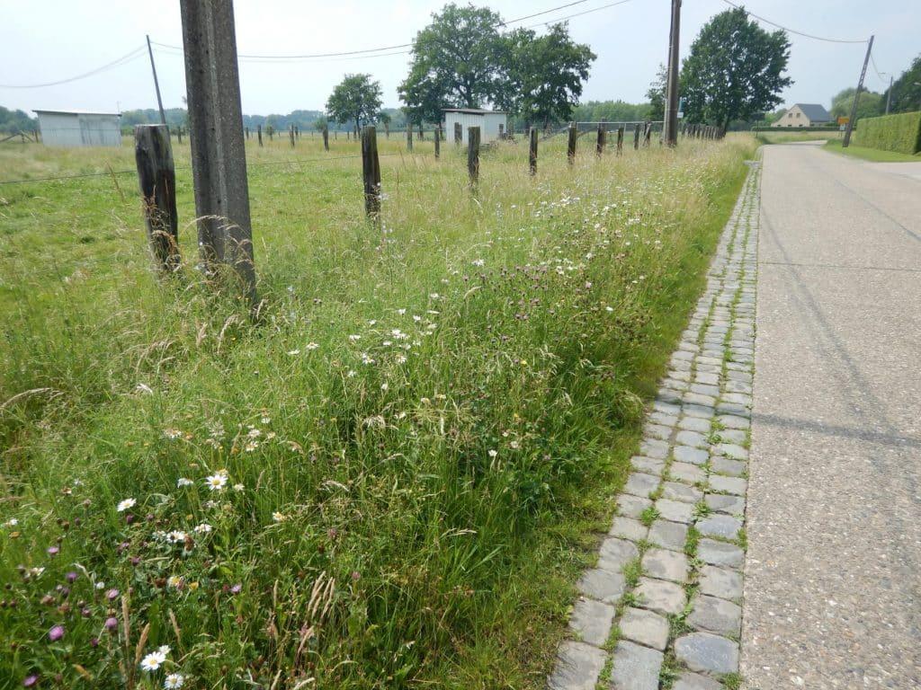 Type 2. Bloemenrijk zonder braam - Flowery without wood or blackberries