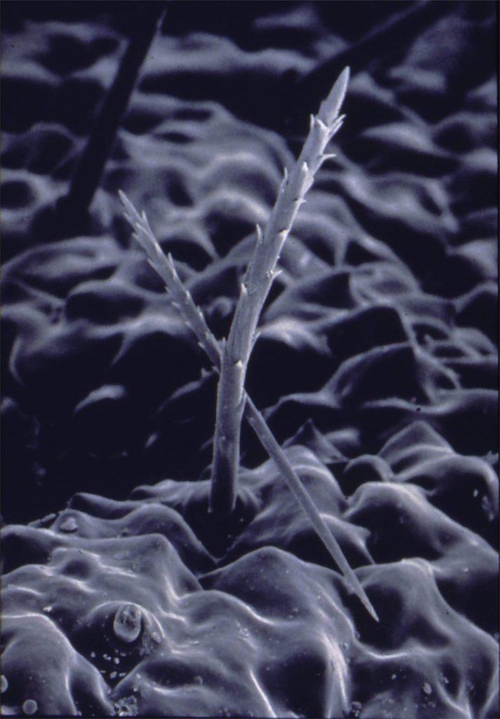 Ecologie: eikenprocessierups gezondheid
